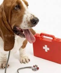 pronto soccorso cani