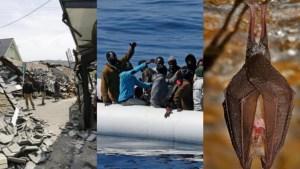 Terremoto, migrantopoli, pipistrelli: 3 esempi di una Italia incartata