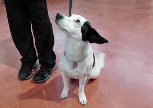 Pipì dei cani, Volterra all'avanguardia: scatta l'obbligo di lavarla con una bottiglietta d'acqua