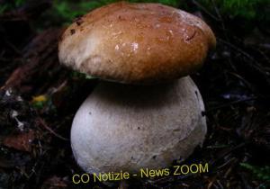Cappelle di funghi porcini alla griglia