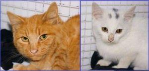 Tom e Kim, protagonisti di un romanzo per gatti