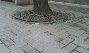 alberocongrata2 Ossona: il tiglio con grata è pericoloso Piazza Litta Prima Pagina