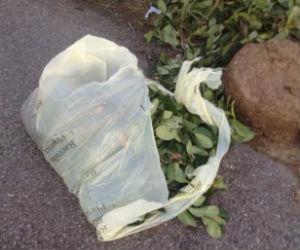Il mistero dei sacchetti della spazzatura di Ossona