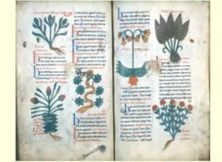codice miniato erboristeria morimondo