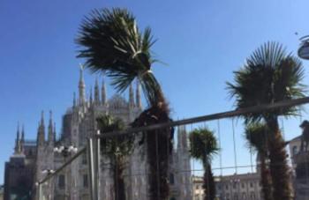 palme-350x227 In gita a veder le Palme in piazza Duomo Piazza Litta Prima Pagina