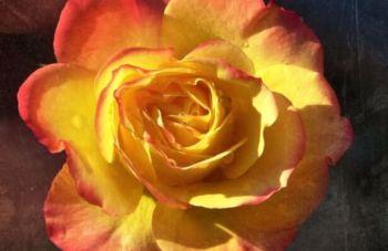 rosa-350x227 Giorno del ricordo delle foibe. Sala, ma cosa fai? Eventi Prima Pagina