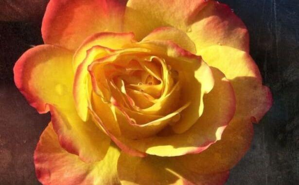 olocausto rosa giornata del ricordo
