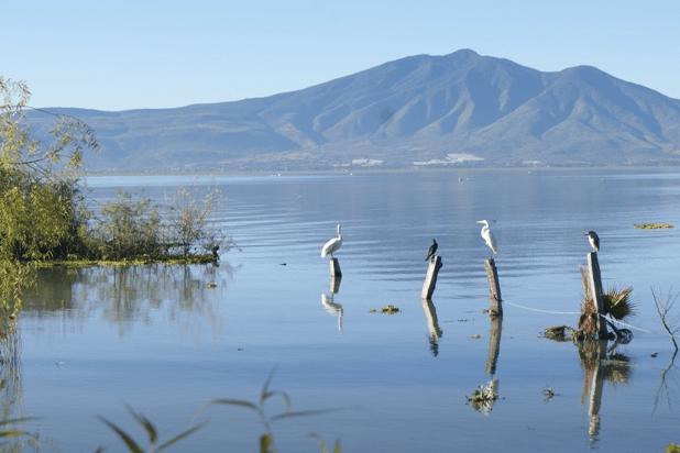 Se agudiza polución en el lago de Chapala | La Crónica de Hoy - Jalisco