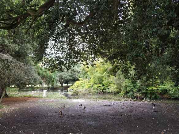 Lago en el Parque Fénix de Dublín.