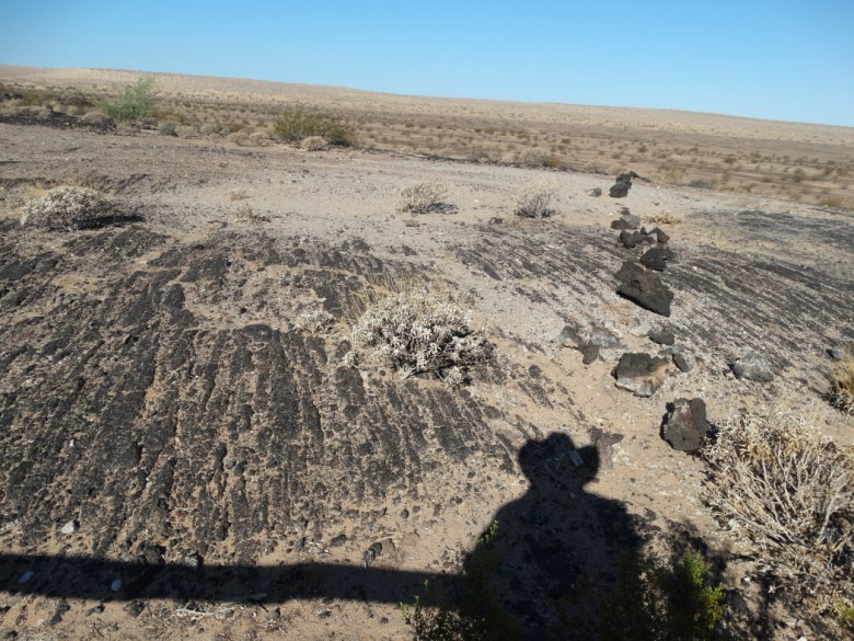 PINACATE01