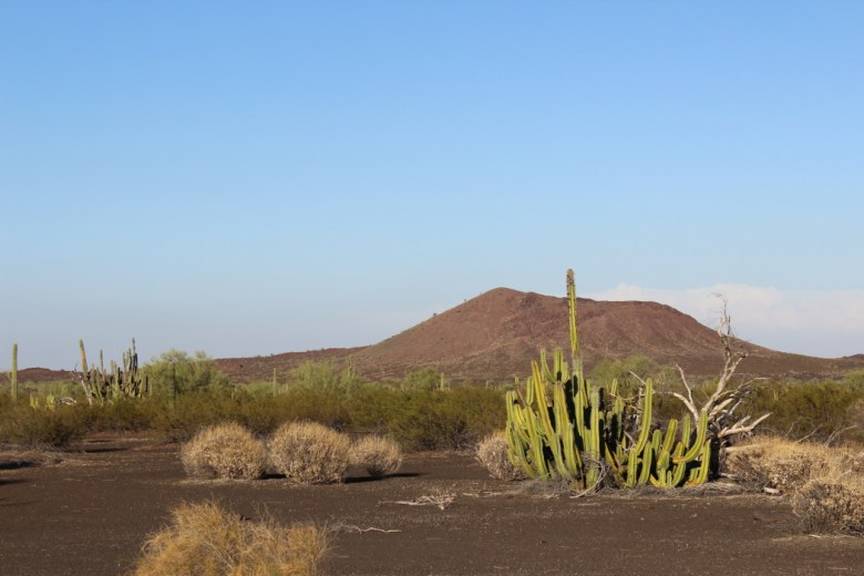 PINACATE21
