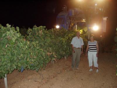 20090826174205-copia-de-vendimia-nocturna-uva-tinta.jpg