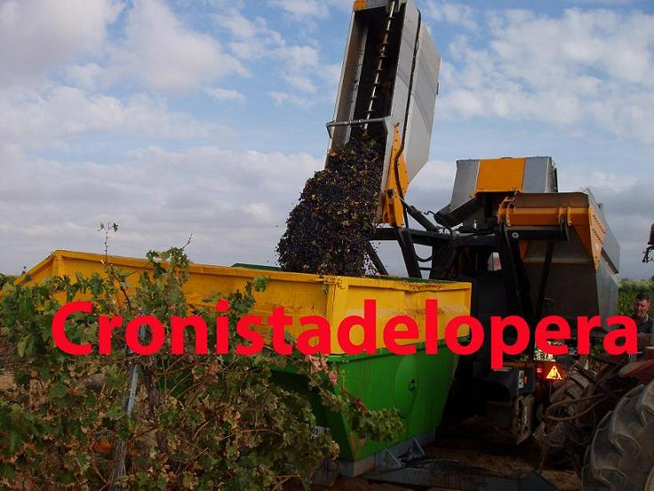 20120830192808-vendimia-uva-tinta-copia.jpg