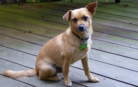 Meet Arlington Pet of the Week: Toby