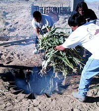 Hopi corn pit roast, ancient preservation method