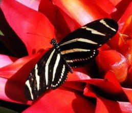 medicine animal, totem, power animal, allies of our soul retreat
