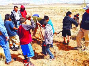 Hopi youth farming group digging holes for fruit trees.