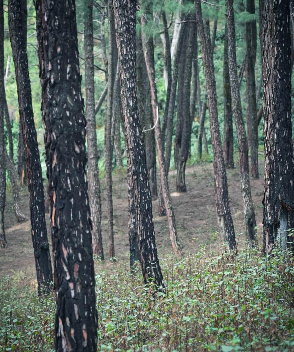 A walk through the jungle to reach the Dharmalaya Institute