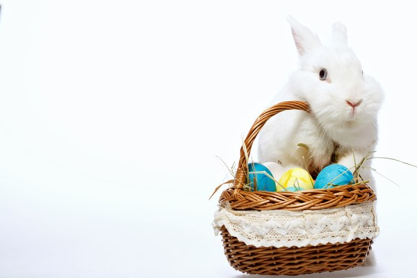 Little Easter bunny in the basket