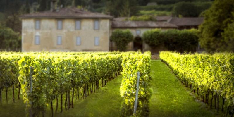 WineFunding piattaforma equity e reward corwdfunding dedicata al vino
