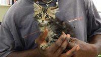 Kitten rescued from truck
