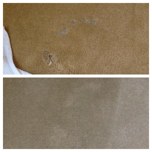 Wax in Carpet Before and After Crown Restoration Services
