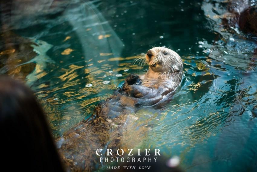 Wedding otter feeding Seattle aquarium