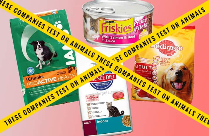 What Are The Top  Rated Dog Food Wet