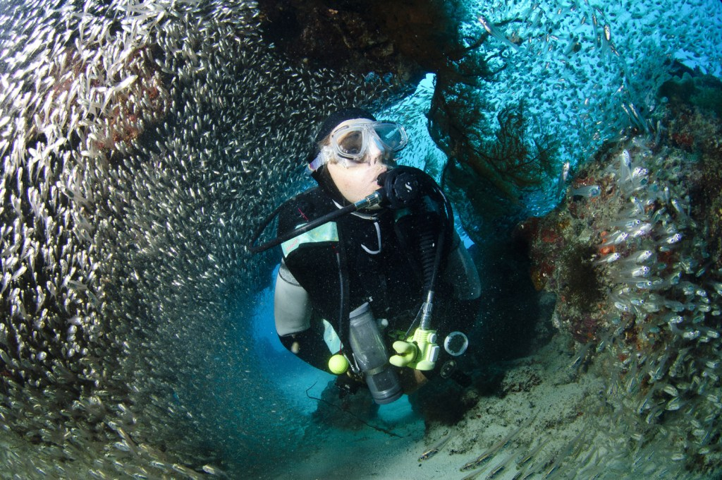 C2 Ribbon reefs- Sylvie amongst a school of Ice Fish