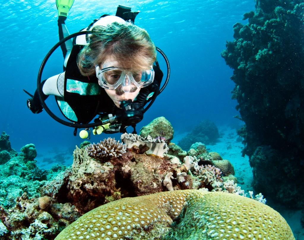 Davie-Reef