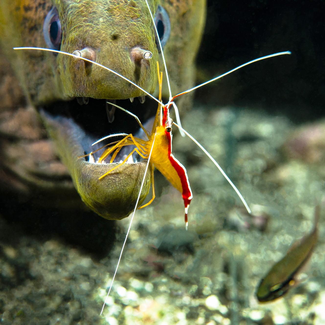 cleaning shrimp at Lawadi