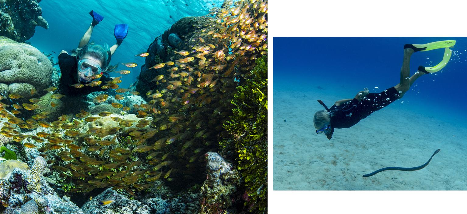 Ashmoe Reef