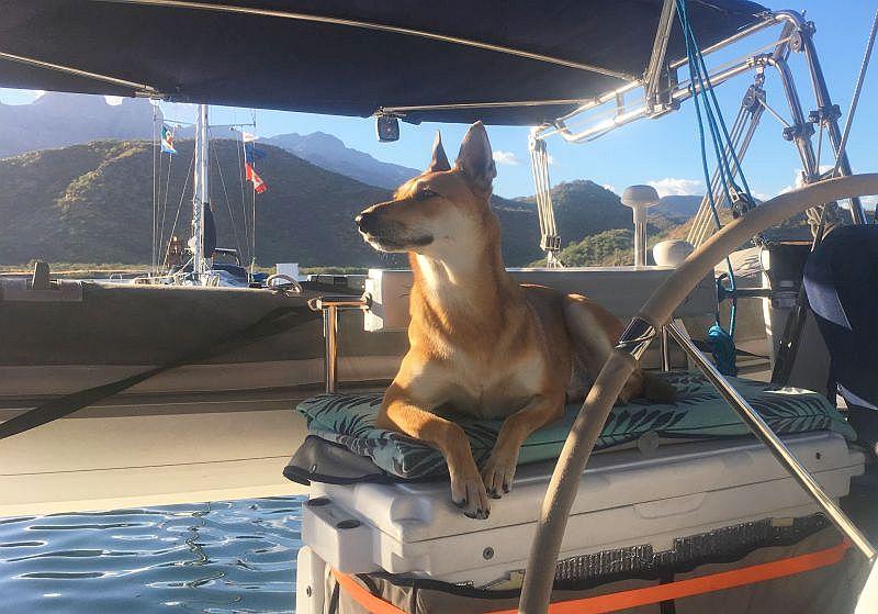 Foxy on lookout in Puerto Escondido