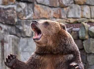 Ces conseils d'argent et d'investissement peuvent vous aider à protéger votre portefeuille des ours