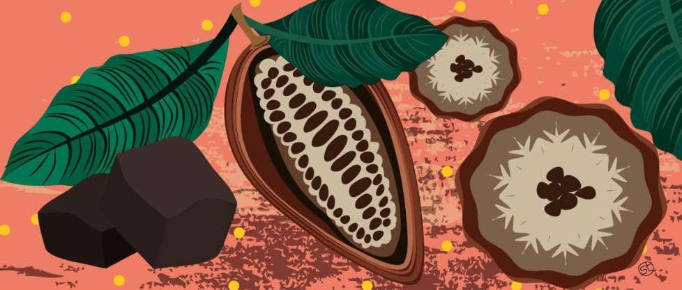 Raw cacao | CrunchyTales Stefania Tomasich