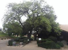 Zaca Mesa pathway