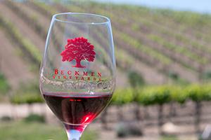 A little wine in the vineyard