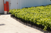 9000 plus plants
