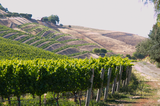 Saarloos and Son Windmill Ranch Vineyard in the Ballard Canyon AVA where Rhones grow so well.
