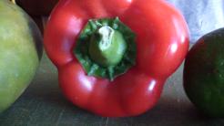Mango Pepper Onion Salsa