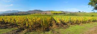 Vineyard at Rosario Valley near Santiago, Chile
