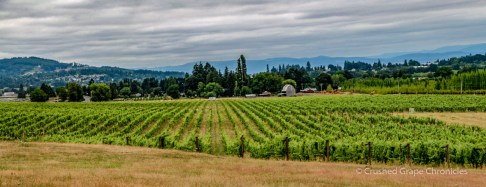 Montinore Vineyards panorama