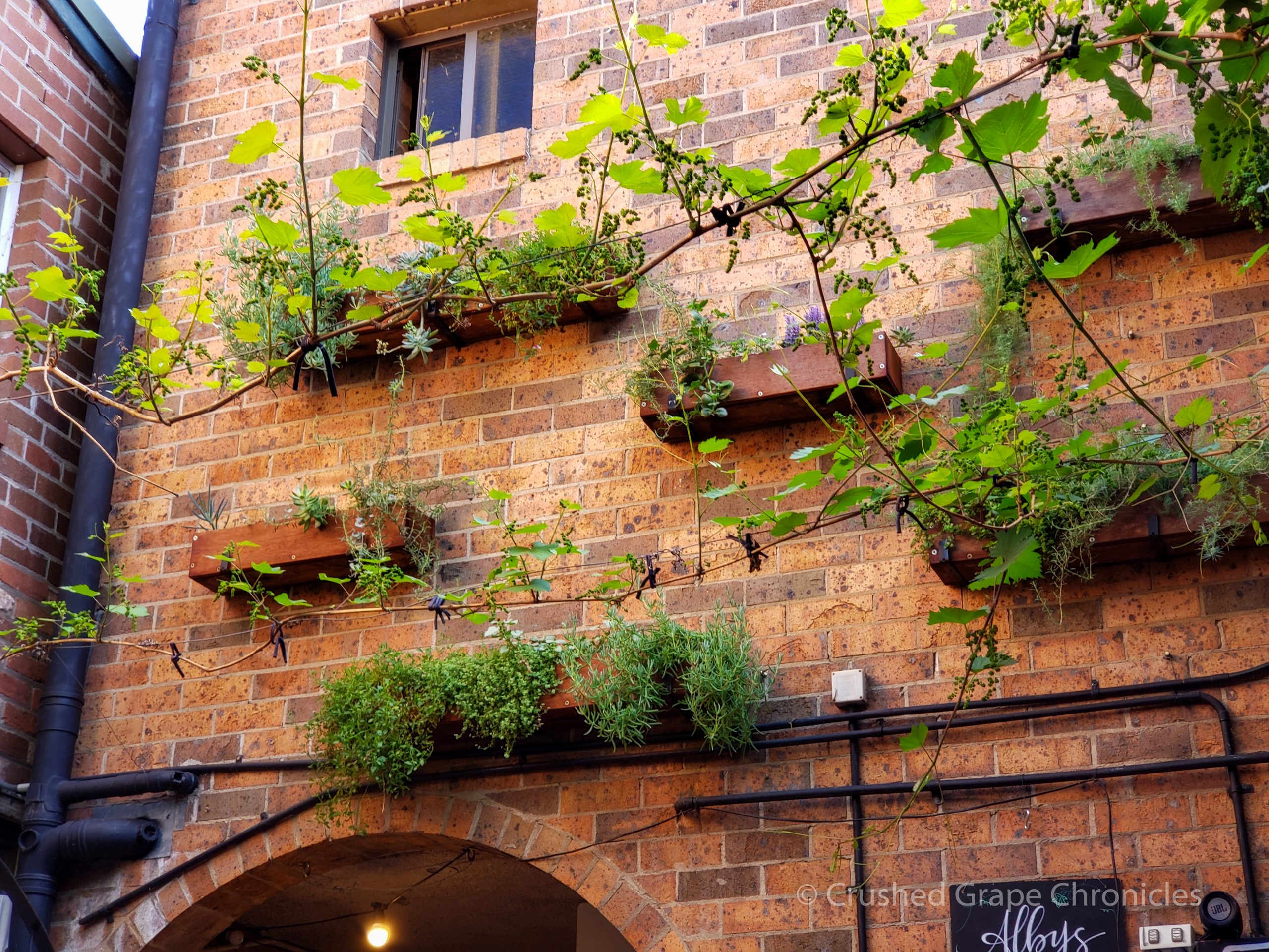 Open to the sky with trees vines and window boxes the enviroment at Alby + Esther's is soothing.
