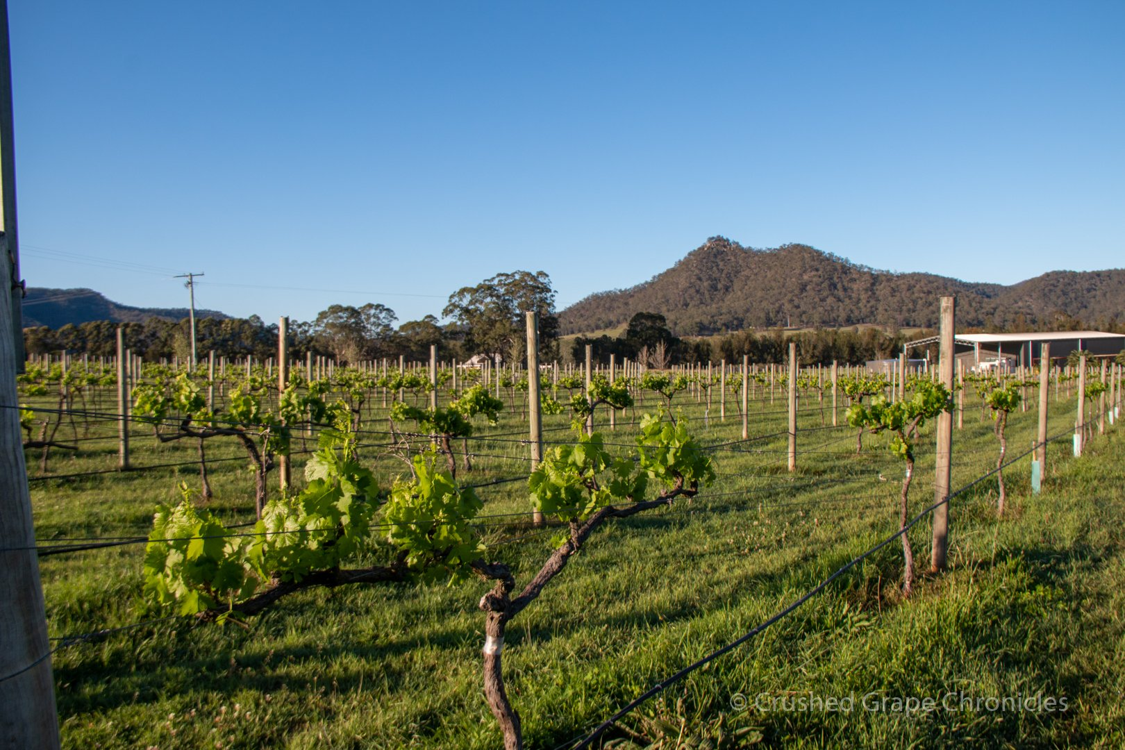 Krinklewood, biodyamic Vineyard, in New South Wales, The Hunter, Australia