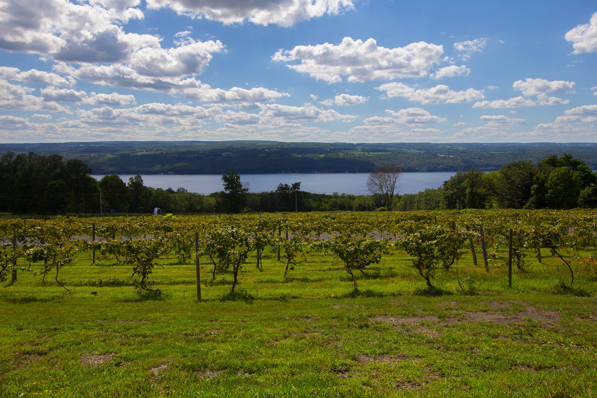 Vineyard & Seneca Lake, The Finger Lakes Region, New York