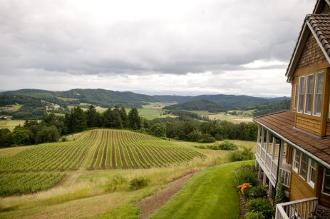 View of the vineyard at Youngberg Hill - photo courtesy of Youngberg Hill