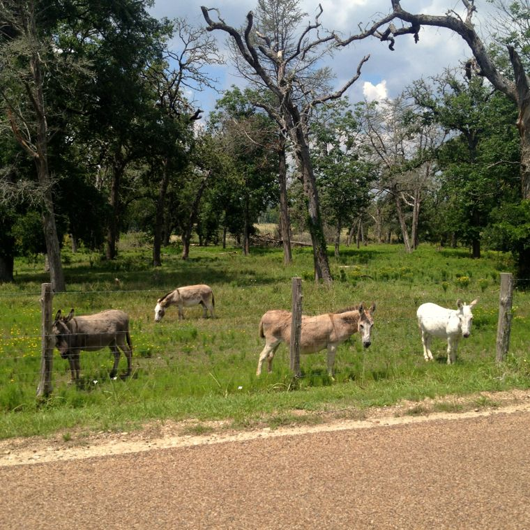 Donkey Roadside