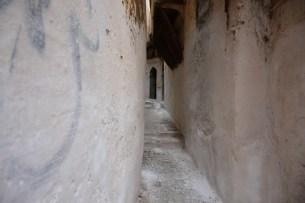 argelia-09
