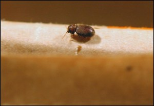 Stored product pests are readily killed by contact with Cryonite dry ice snow.