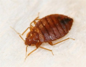 Cryonite is a key tool for use in bed bug management programs.